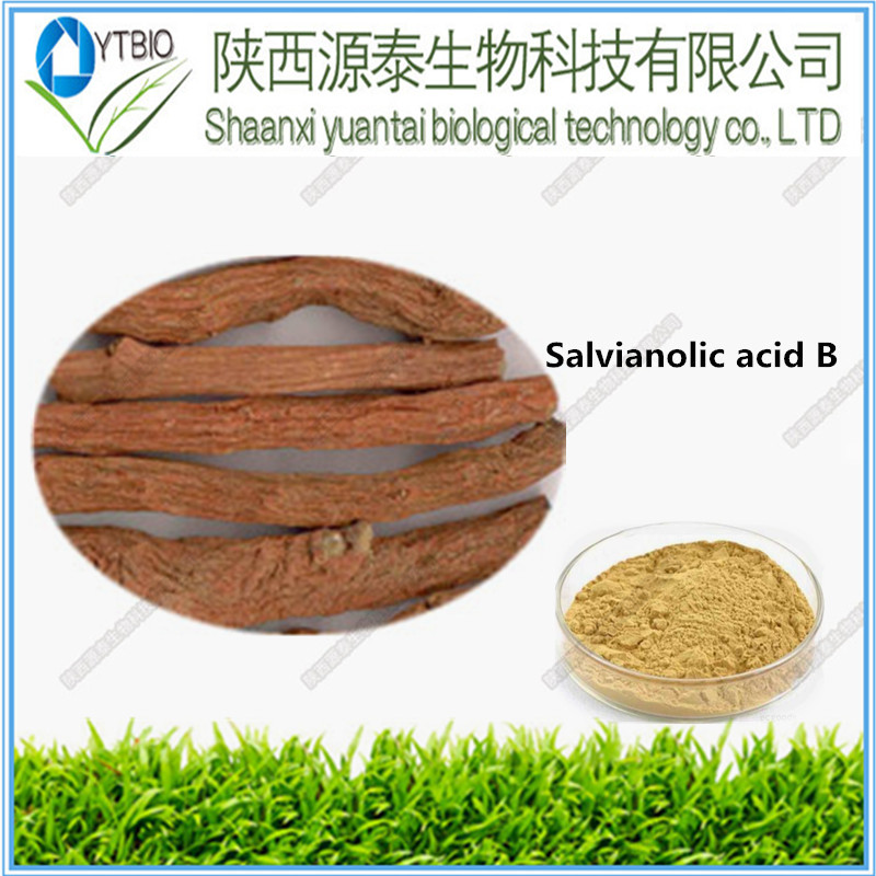 Herbal Extract Medical Grade Plant Extract Salvia Root extract powder Lithospermic Acid B A C D