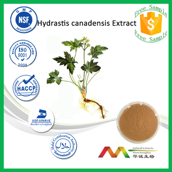 NSF-cGMP Professional Manufacturer Hydrastis Canadensis Extract/Golden Seal Root Extract