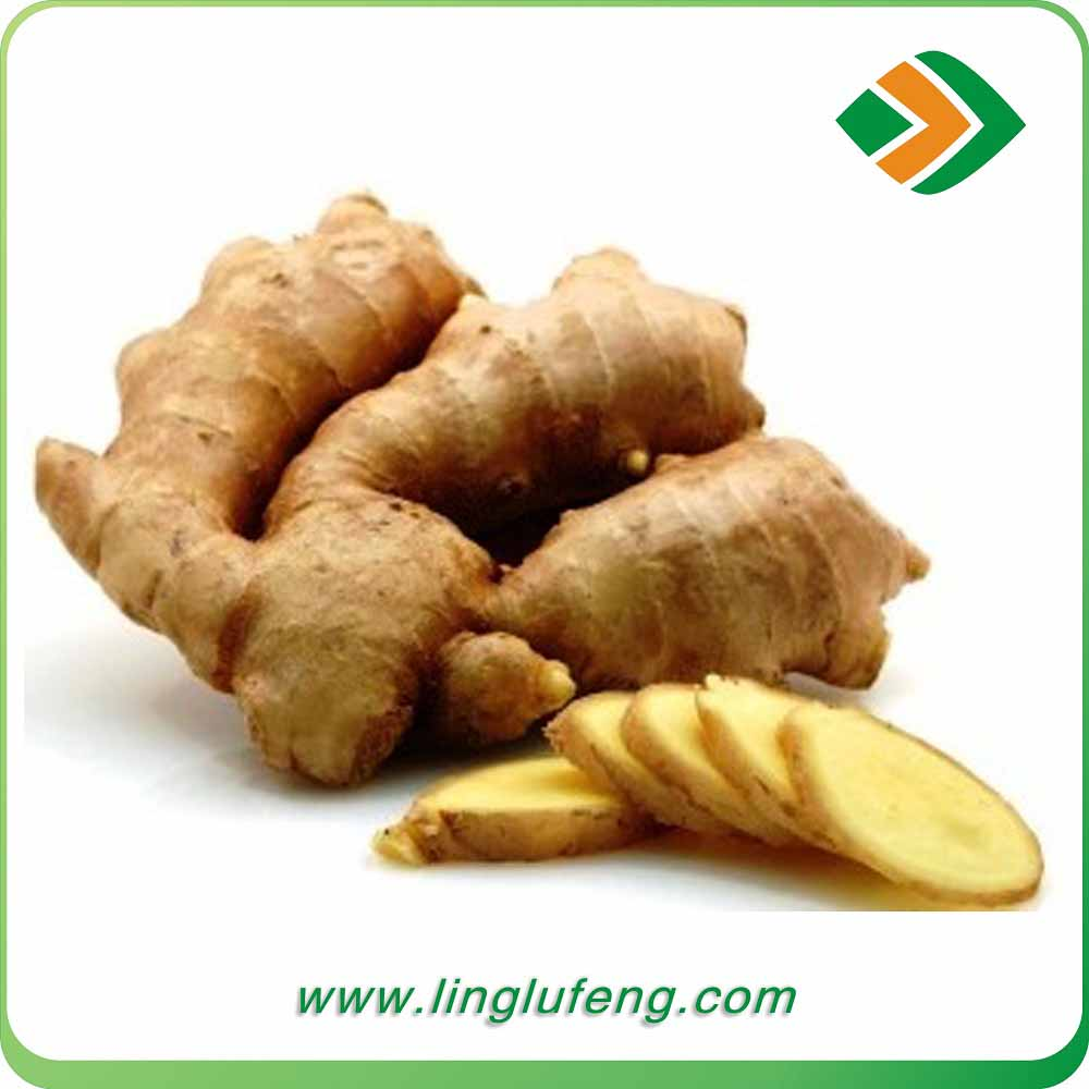 Various Types Ginger Uses Ginger Tea Benefits