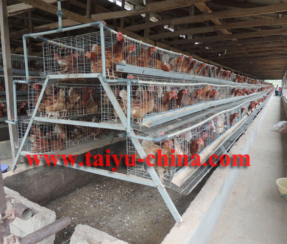 Taiyu Used Poultry Battery Cages For Sale Kenya