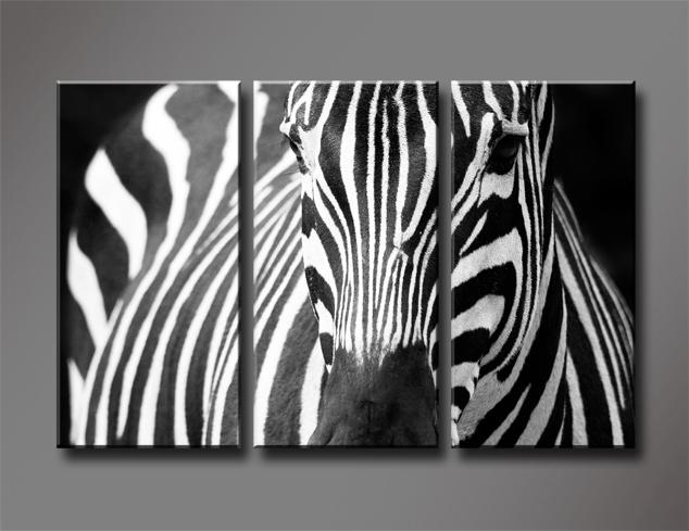 Black and White Zebra, 3 Panels/Set HD Canvas Print ...