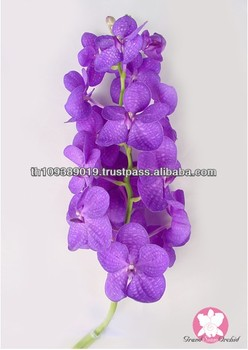 Thailand Authentic Purple Color Fresh Cut Vanda Orchids
