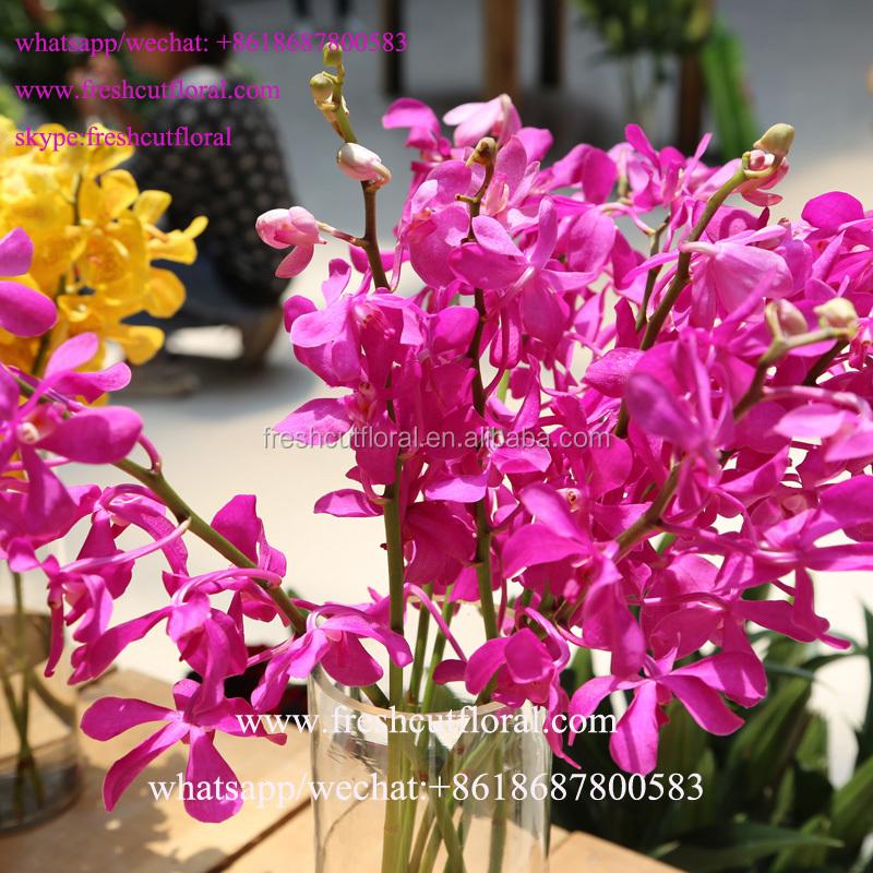 2016 Hoge Kwaliteit Bloemen Orchideeen En Japan Bewaard Rozen Live Voor Boeket Bruiloft Bloemen