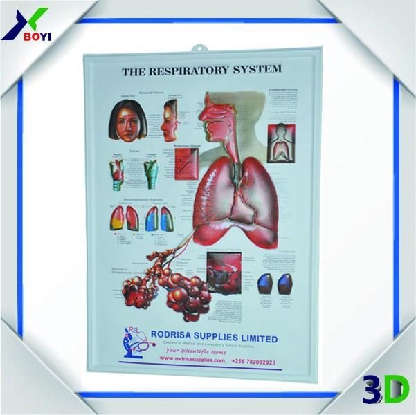 Dentel Poster 3d Dental Medical Anatomy Chart 3d Teeth Embossed