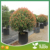 China Tree Air Prune Plant Root Fast Growth Container Pot