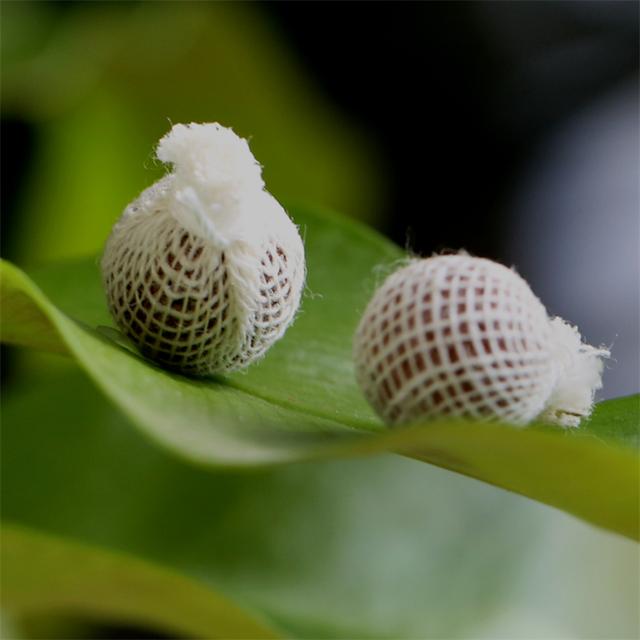 """Résultat de recherche d'images pour """"Essayez des tampons à base de plantes"""""""