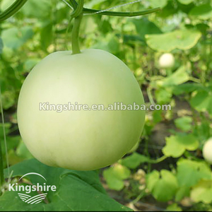 Kingshire Hybrid Japanese Sweet Melon Seed For Wholesale