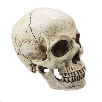 Custom high quality lifelike hand carved resin skulls for crafts