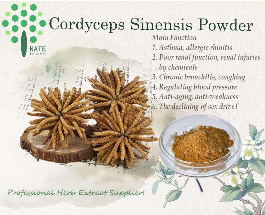Cordyceps Mycelium Extract Caterpillar Fungus Powder Mesona Chinensis  Extract Powdered Cordyceps Polysaccharide 30% 50% 70% - Buy Cordyceps