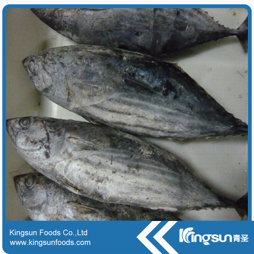 New Season Natural Frozen Skipjack Tuna