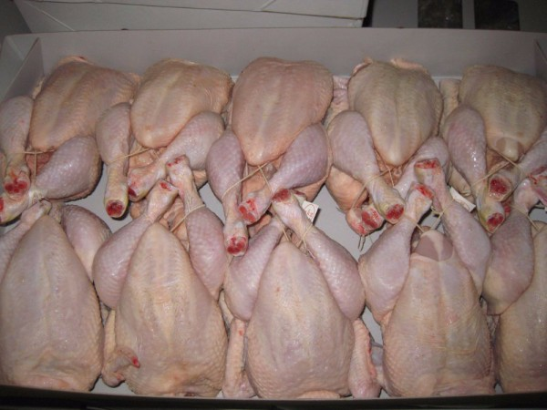 Best quality frozen chiken fillet/chicken breasts