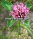 Organic Red Clover Extract Powder