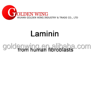 Laminin from human fibroblasts