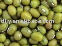 Sell 2009 Green Mung Bean