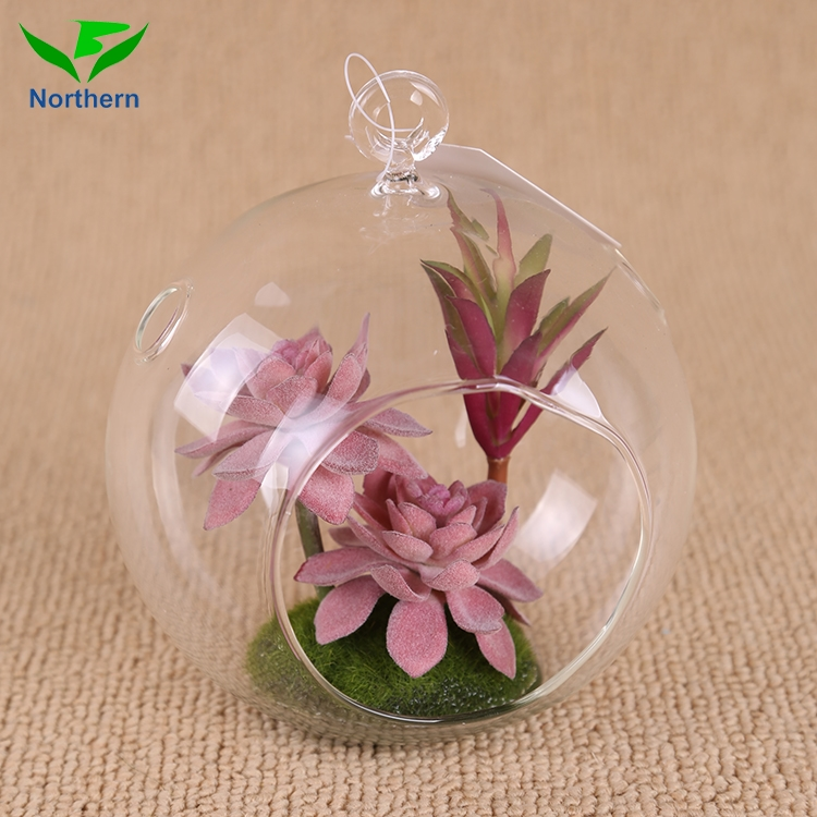 China supplier factory direct mini succulent plant in glass