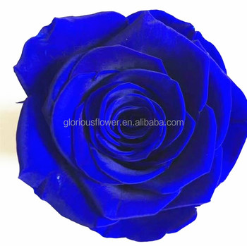 valentines day gift natural flower blue roses preserved roses with, Ideas