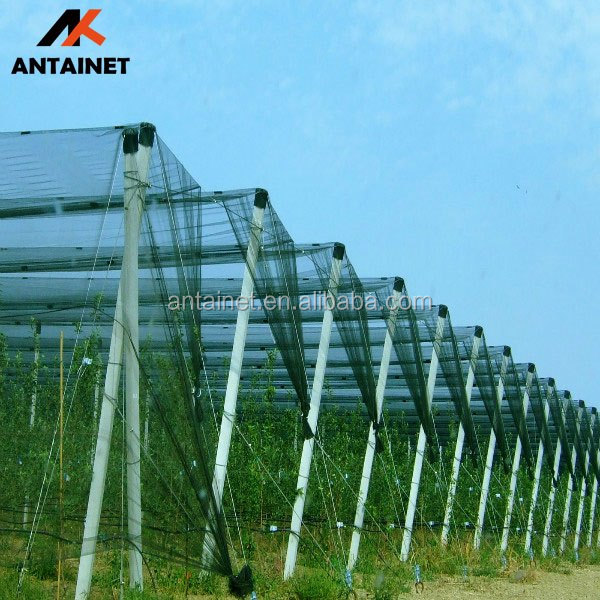 Hail Guard Plastic Hail Protection Fruit Tree Netting Buy Fruit Tree Netting Hail Protection Netting Hail Protection Product On Alibaba Com