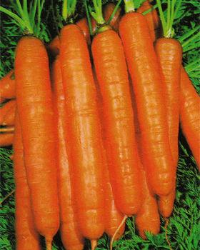 Hasil gambar untuk nantes wortel