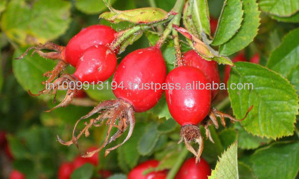 India's No.1 Manufacturer of Pure Rose Hip Seed Carrier Oil