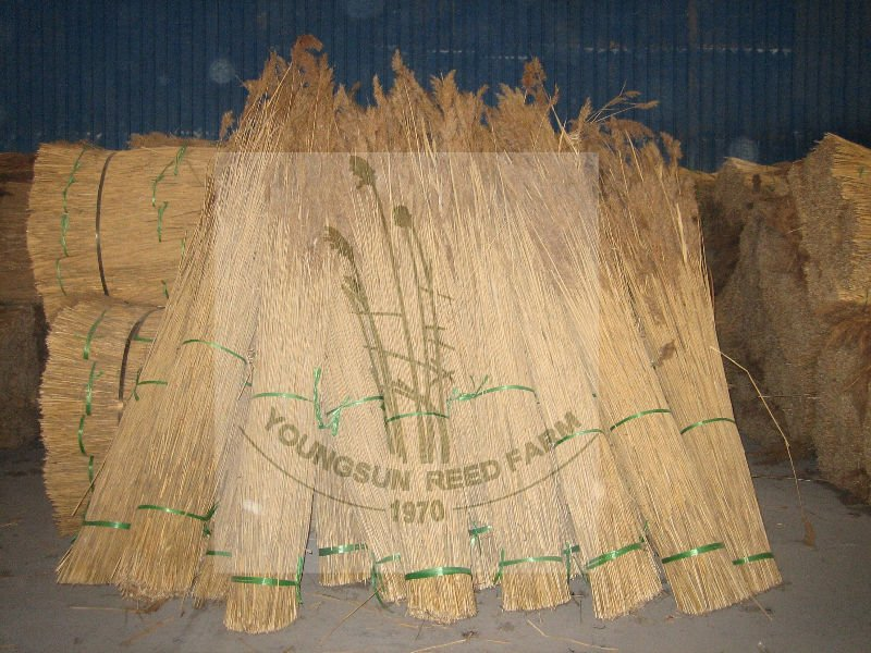 thatching water reed for roof thatching