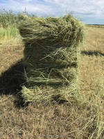 Leymus Chinensis hay bales,animal feed, cattle feed plant