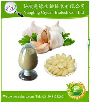 Factory Supply Directly Garlic Extract With Supplements and Pharmaceuticals