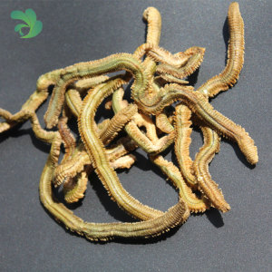 Agrok high attractive dried green lugworm fishing bait lure