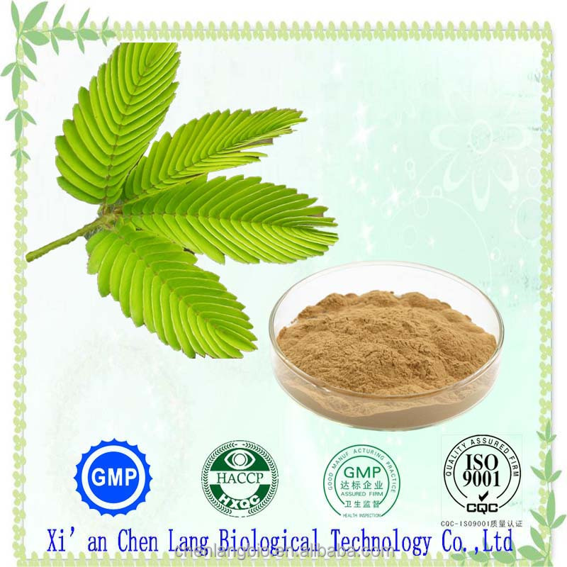 Manufacturer Supply Herbal Plant Mimosa Pudica Powder