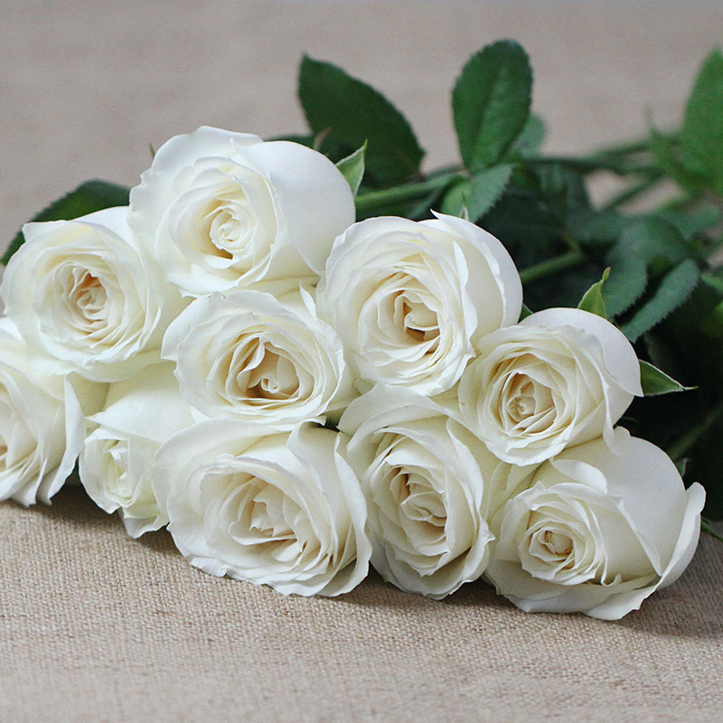 Wholesale white roses for salesetanike buy fresh cut flowers white rose flower are very popular in design different types of flowers arrangments many of ornamental plants china flowers are design in wedding mightylinksfo