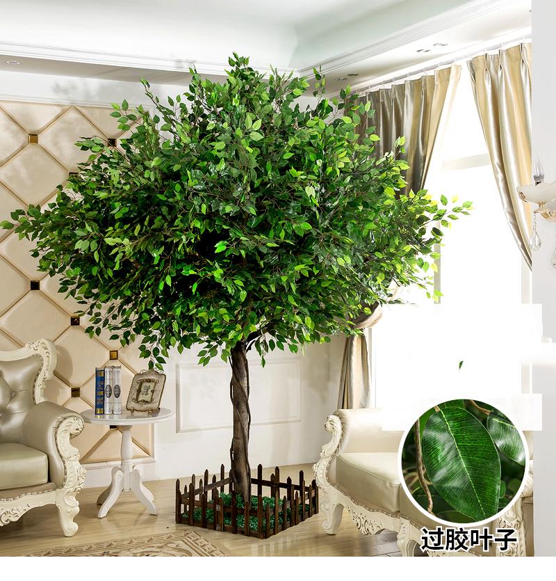 Gemeinsame Pappelfeige Samen,Ficus Religiosa,Buddha Baum Bodhi Baum Bonsai @AE_85