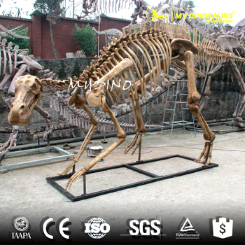 MY DINO-DSS010 Fossils Replica Dinosaur Animated Dinosaur Skeleton