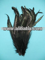 "Rooster Coque Feathers BLACK 14-16 "" 5yds $225"
