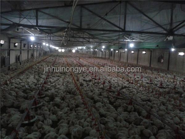 Chicken shed drinking system,broiler chicken house design modern chicken farm