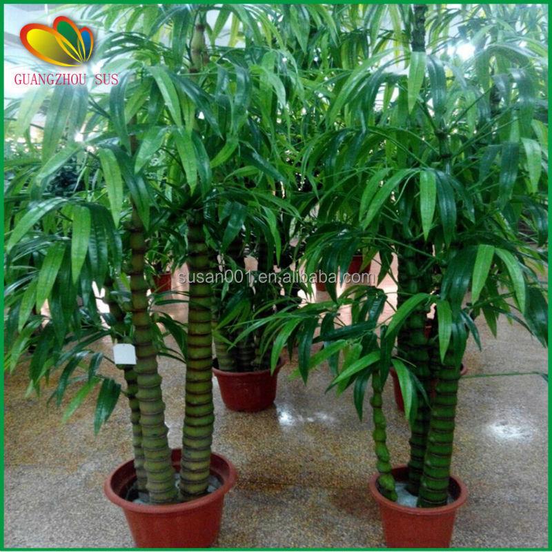 Outdoor Artificial Buddha Bamboo Artificial Bamboo Tree For Garden Decor Buy Outdoor