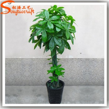 Cheap artificial trees recycle tropical ornamental ficus plants ...