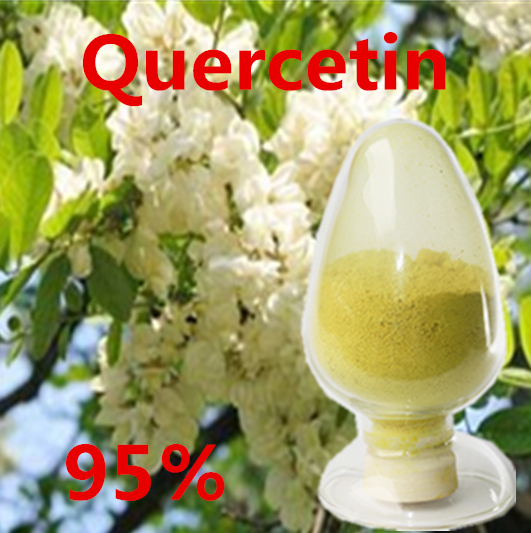 Chinese Herbal Medicine for HPLC 95% Quercetin Dihydrate CAS No 6151-25-3