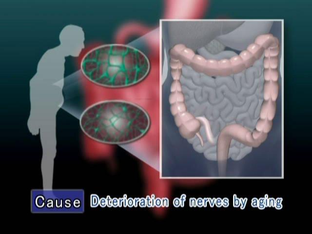 Human Anatomy Dvd Digestive System Buy Human Anatomymedical Image