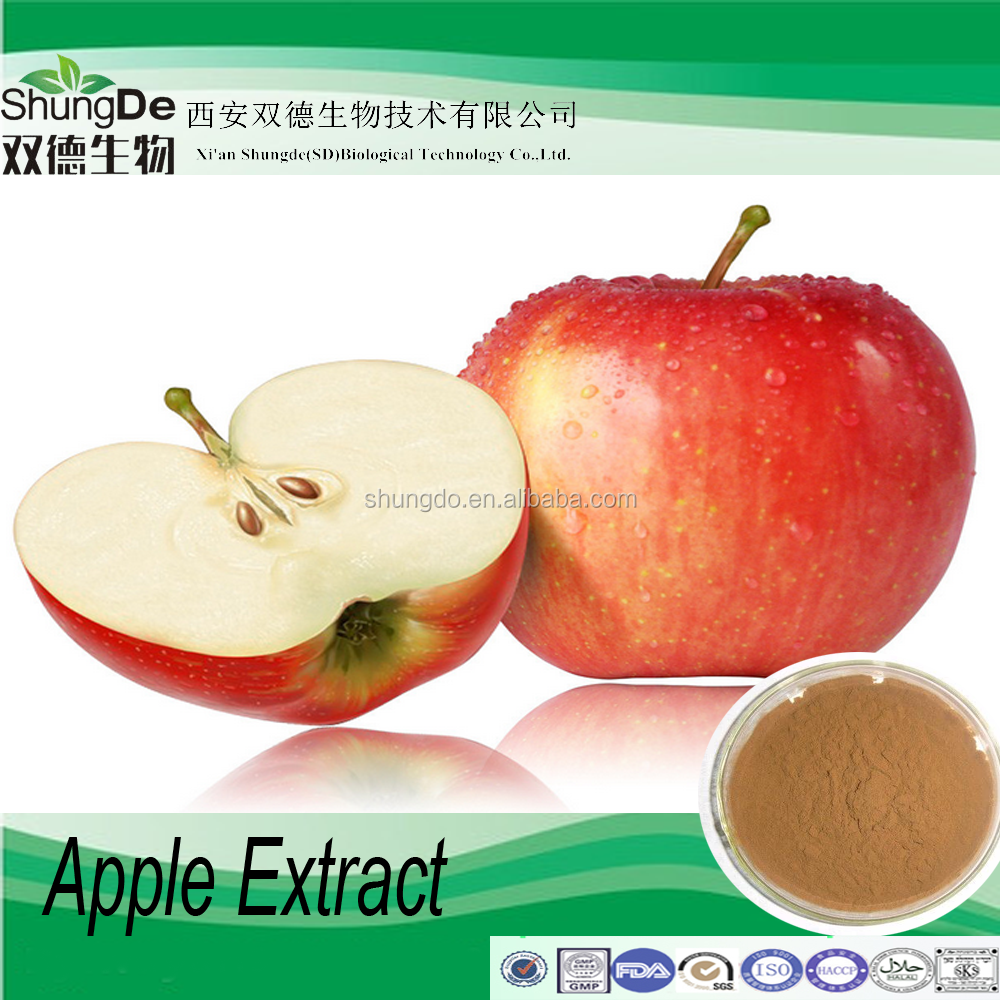 High quality apple polyphenol powder/apple root extract of Phlorizin