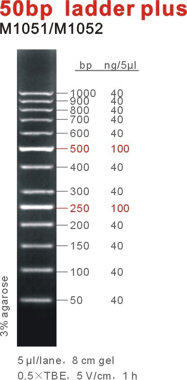 50bp DNA Ladder Plus