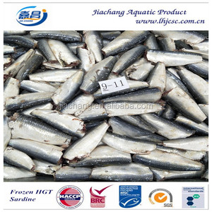 Frozen Fresh HGT Sardine for canning food