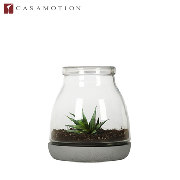New Collection Casamotion Short Clear Glass Terrarium Vase For Air