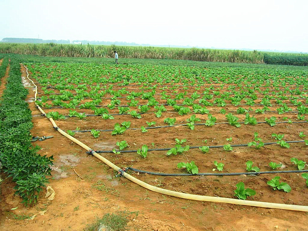 Drip Irrigation System With Blue Line Like Toro Used In