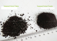 High quality soluble seaweed extract fertilizer for customer