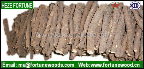 cold resistant paulownia trees root cuttings for plantation
