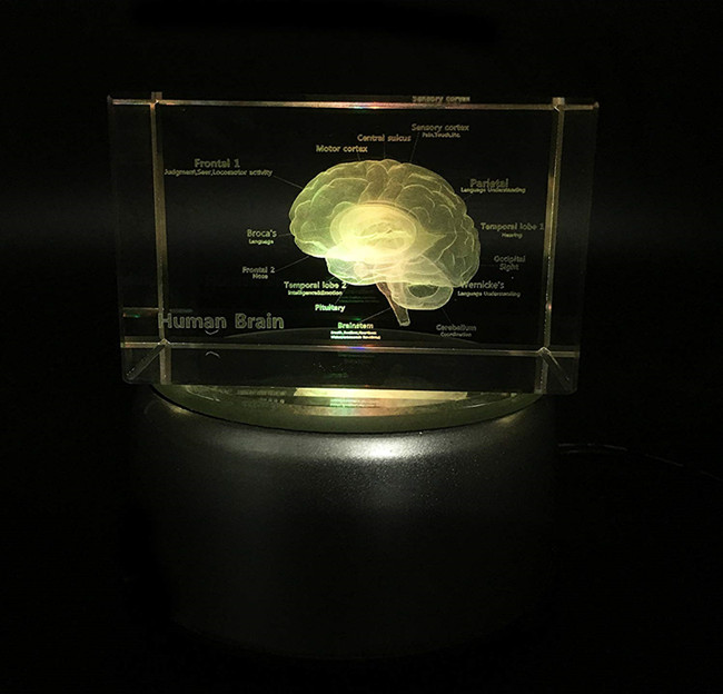 3D Laser Etched  Brain design Anatomical Model Paperweight in Crystal Glass Cube Science Gift