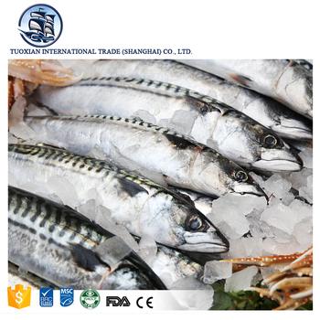 Sea Frozen Pacific Mackerel Fish Seafood Suppliers - Buy Iqf Pacific  Mackerel,Pacific Mackerel Fish,Fish Product on Alibaba com