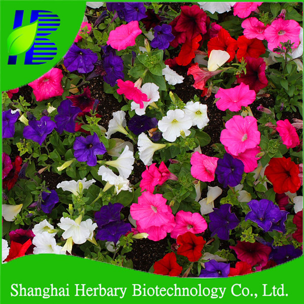 All kinds of morning glory flower seeds for garden growing buy 7e3e6709c93d70cfc6105ee0f9dcd100bba12b71g mightylinksfo