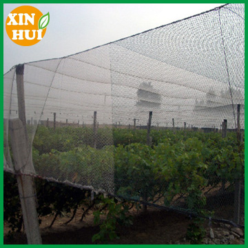 for Plant, Aviary, Tree hdpe Commercial Knitted prevent bird net