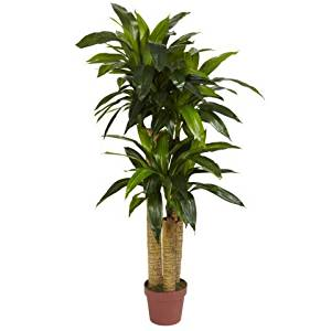 Wholesale 4 Ft Corn Stalk Dracaena Silk Plant Real Touch) , [Decor, Silk Flowers]