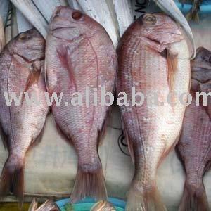 Cerniaorataredmulletpesce Spadapesce Azzurrodentice Buy Pesce